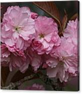 Precious Cherry Blossom Canvas Print