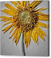 Pressed Sunshine Flower Canvas Print