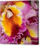 Pretty And Colorful Orchids Canvas Print