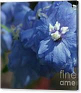 Pretty Blue Delphinia Canvas Print