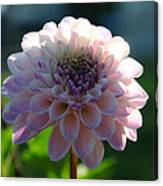 Pretty Flower Canvas Print