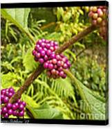 Pretty In Pink Berrys Canvas Print