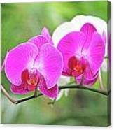 Pretty Orchids All In A Row Canvas Print