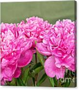 Pretty Peonies Canvas Print