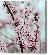 Pretty Pink Flowering Tree Canvas Print
