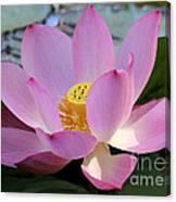 Pretty Pink Lotus Canvas Print