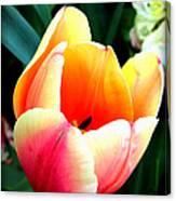 Pretty Tulip Canvas Print