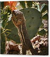 Prickly Lunch  Canvas Print