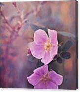 Prickly Rose Canvas Print
