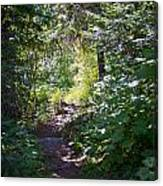 Priest Lake Trail Series IIi - Trail Shadows Canvas Print
