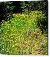 Priest Lake Trail Series Iv - Small Meadow Canvas Print