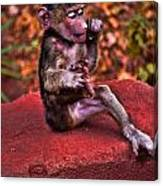 Primate Footsie Games Canvas Print