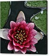 Primo Waterlily Canvas Print