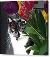 Princess The Cat And Tulips Canvas Print