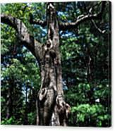 Princess Tree Canvas Print