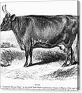 Prize Devon Cow, 1855 Canvas Print