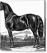 Prize Horse, 1857 Canvas Print