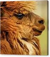Profile Of A Camelid Canvas Print