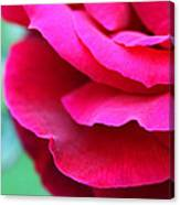 Profile Of A Rose Canvas Print