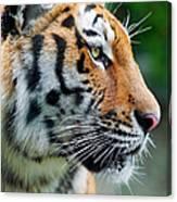 Profile Of A Siberian Tiger Canvas Print