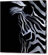 Profile Of Zebra Canvas Print