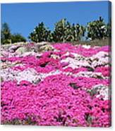Profusion Of Pink Canvas Print