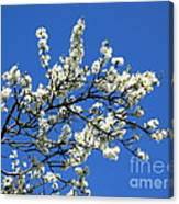 Promise Of Summer Canvas Print
