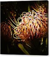 Protea Flower 10 Canvas Print