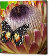 Protea With Speckled Butterfly Canvas Print