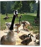 Protective Mad Mama Canadian Goose Canvas Print