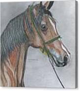 Proud Arabian  Canvas Print