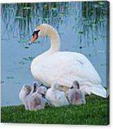 Proud Mother Swan Canvas Print