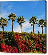 Pt. Dume Palms Canvas Print