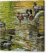 Ducks Unlimited 02 Canvas Print