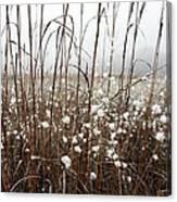 Puffed Wheat Canvas Print