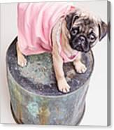 Pug Puppy Pink Sun Dress Canvas Print