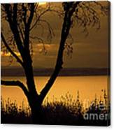 Pugent Sound Silhouetted Tree Canvas Print