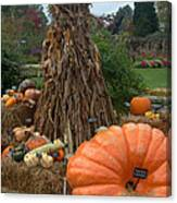 Pumpins And Gourds Canvas Print
