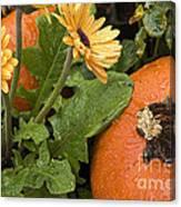 Pumpkin And Gerberas Canvas Print