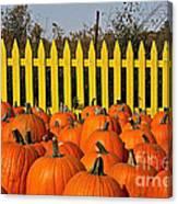 Pumpkin Corral Canvas Print