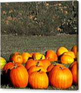 Pumpkin Farm Canvas Print