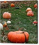 Pumpkin Field Canvas Print