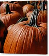 Pumpkin Harvest 1 Canvas Print