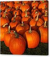 Pumpkin Pie Anyone Canvas Print