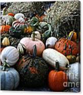 Pumpkin Piles Canvas Print