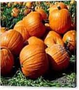 Pumpkin Pileup Canvas Print
