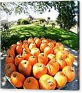 Pumpkin Round Canvas Print