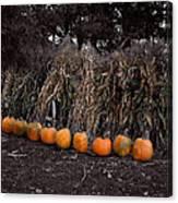 Pumpkins And Cornstalks Canvas Print