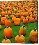 Pumpkins Forever Canvas Print