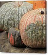 Pumpkins Galore V1 Canvas Print